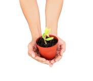 Tree pot. Royalty Free Stock Image