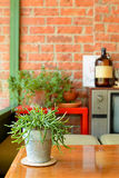 Tree pot on the table in Vintage room. Of House royalty free stock images