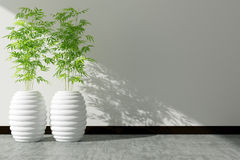 Tree pot and white wall interior decorated Stock Photography