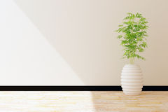 Tree pot and white wall interior decorated Royalty Free Stock Image