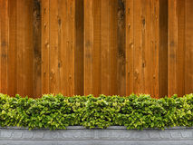 Tree in pot with wooden wall Stock Image