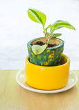 Tree in pots on wood  table. With day light Royalty Free Stock Images