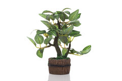 Tree in potted. On white background royalty free stock photo