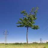 Tree and power lines Royalty Free Stock Photo