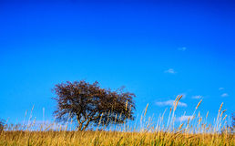A tree on the prairie Stock Photo