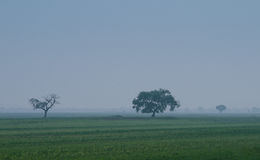 Tree on the prairie Stock Photography