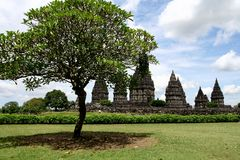 Tree and Prambanan temples panorama. In Java Indonesia Stock Image