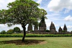 Tree and Prambanan temples panorama Stock Image