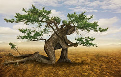 Tree in prayer. A tree bends down in prayer in the desert Stock Photo