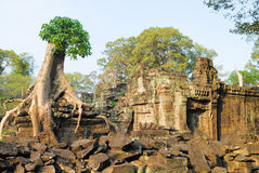 Tree at Preah Khan Royalty Free Stock Photography
