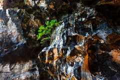 Tree on a precipice Stock Photos