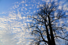 Tree and pretty sky Royalty Free Stock Photo