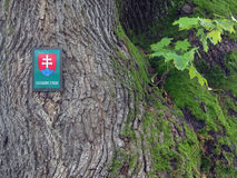 Tree protected by state, in Slovakia Stock Photo