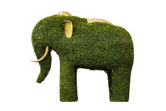 Tree pruned into big elephant shape with golden Ivory and ear, isolated with clipping paths on white background. Stock Photos