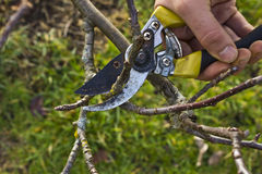 Tree Pruning Royalty Free Stock Photo