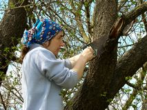 Tree pruning Royalty Free Stock Images