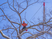 Tree pruning and cutting. By a lumberjack in winter months Stock Photography