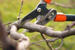Tree pruning royalty free stock image