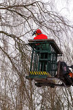 Tree pruning,  lumberjack with a chainsaw on an elevated work pl Royalty Free Stock Photos