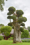 Tree pruning Stock Photo