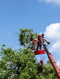 Tree pruning and sawing by a man with a chainsaw standing on the platform of a mechanical chairlift royalty free stock images