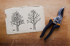 Tree pruning before and after Stock Photography