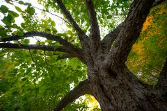 Tree in the public park stock photography