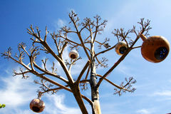 Tree with pumpkin lamps in Turkey Royalty Free Stock Photo