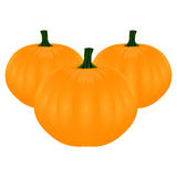 Tree pumpkins Stock Images