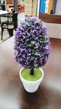 Tree Purple Stock Photography