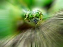 Tree Python. Head of a green tree python, blurred background, Morelia viridis Stock Image
