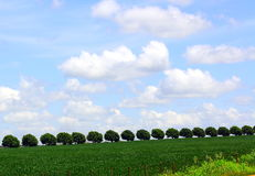 Tree queue in county side royalty free stock photo