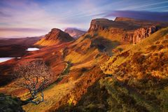Tree in Quiraing mountain range. View from Quiraing mountains into valleys. Amazing hilly landscape of Isle of Skye, Scotland. royalty free stock photos