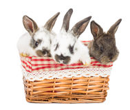 Tree rabbits in a basket Royalty Free Stock Images