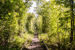 Tree rail tunnel in forest. Beautiful tree rail tunnel in forest called The tunnel of love Royalty Free Stock Photo