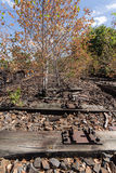 Tree on railway, railroad, rail track , abandoned, destroyed and overgrown wood Stock Images