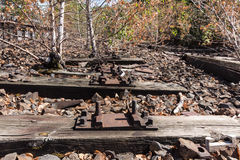 Tree on railway, railroad, rail track , abandoned, destroyed and overgrown wood Royalty Free Stock Photos