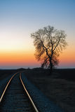 Tree by the railway at sunset Royalty Free Stock Image