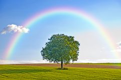 Tree with rainbow Stock Image