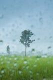 Tree in rainy scene in rice field Stock Photos