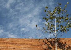 Tree with rammed earth wall material texture on sky backgro. Tree with rammed earth wall material texture on blue sky background Royalty Free Stock Image