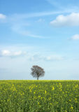 Tree 1. Tree with green yellow field and blue sky stock photo