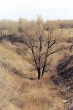 Tree in the ravine Stock Photo