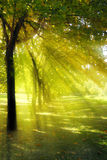 Tree with rays of light Stock Photo