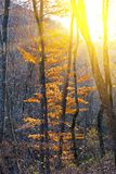 Tree in a rays of sun Royalty Free Stock Images