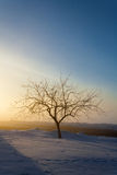 Tree in the rays of the sun. Winter,Russia Stock Images