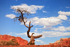 Tree in the red desert of Southwest USA Stock Photos