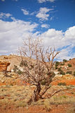 Tree in the red desert of Southwest USA, Capitol Reef National Park Royalty Free Stock Images