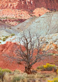 Tree in the red desert of Southwest USA Royalty Free Stock Photo