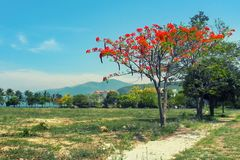 Tree with red flowers against mountains and sky royalty free stock images